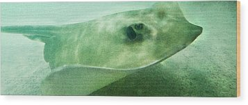 Phantom - Manta Ray Art By Sharon Cummings Wood Print by Sharon Cummings