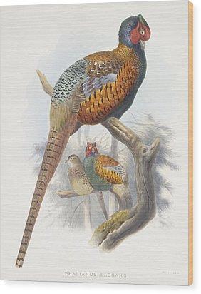 Phasianus Elegans Elegant Pheasant Wood Print