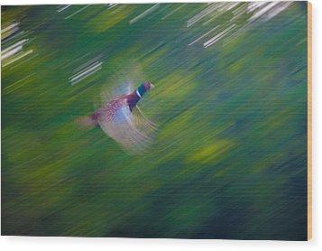 Pheasant Flight Wood Print by Rob Hemphill