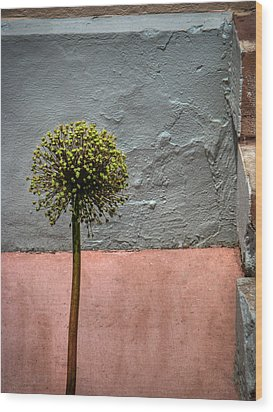 Wood Print featuring the photograph Philly Plant by Glenn DiPaola