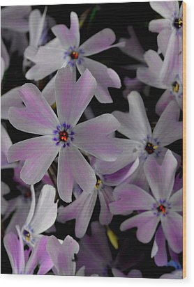 Phlox- Limited Edition 1 Of 10 Wood Print