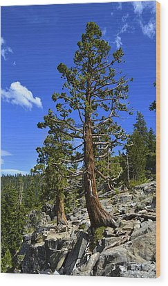 Trees Near Emerald Bay Lake Tahoe Wood Print