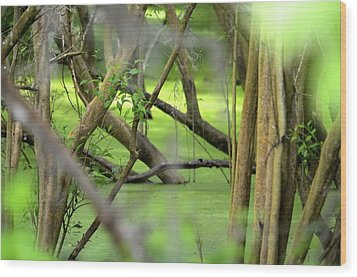Green Water At Brazos Bend State Park In Texas Wood Print