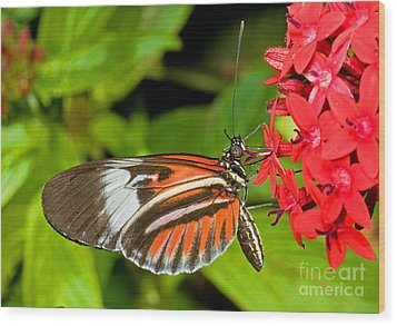 Piano Key Butterfly Wood Print by Millard H. Sharp