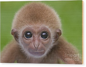 Pick A Card Any Card Wood Print by Ashley Vincent