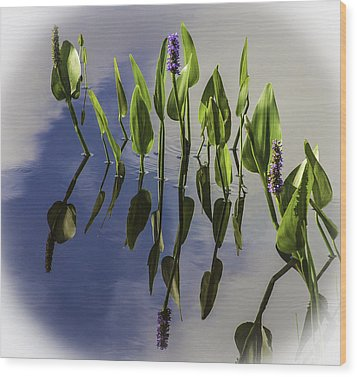 Pickerel Weed Vignetted In White Wood Print by Karen Stephenson
