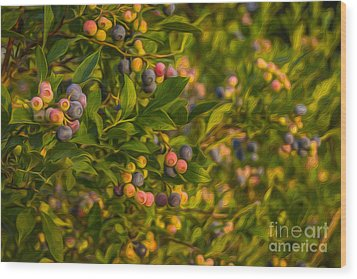 Pickin Blueberries Wood Print