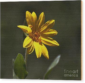 Pickin' Wildflowers  Wood Print by Juls Adams