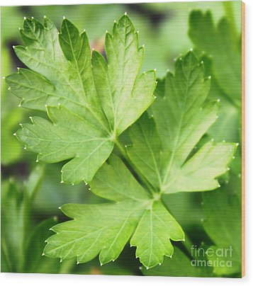 Picture Perfect Parsley Wood Print by French Toast
