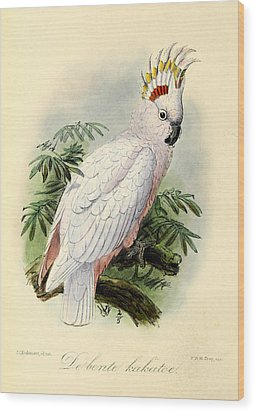 Pied Cockatoo Wood Print by Anton Oreshkin
