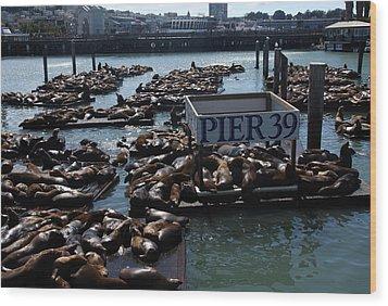 Pier 39 San Francisco Bay Wood Print by Aidan Moran