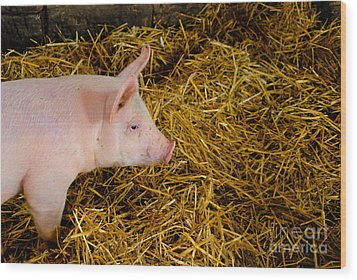 Pig Standing In Hay Wood Print by Amy Cicconi