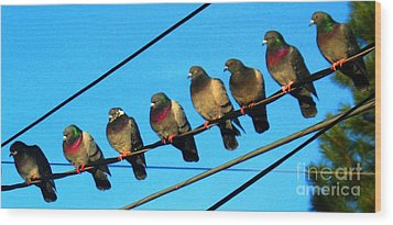 Pigeon Beauty Pageant  Wood Print