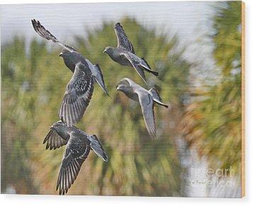 Pigeon Brigade Wood Print by Deborah Benoit