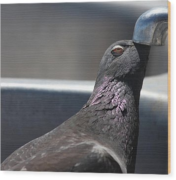 Pigeon In Ecstasy  Wood Print by Nathan Rupert