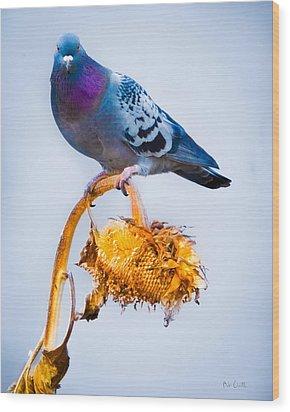 Pigeon On Sunflower Wood Print by Bob Orsillo