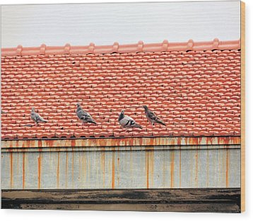 Wood Print featuring the photograph Pigeons On Roof by Aaron Martens