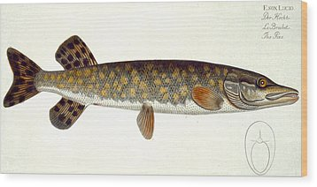 Pike Wood Print by Andreas Ludwig Kruger