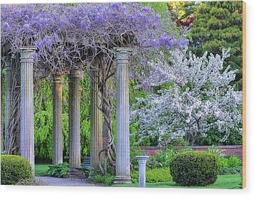 Pillars Of Wisteria Wood Print