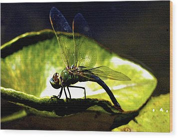 Pinao The Hawaiian Dragonfly Wood Print