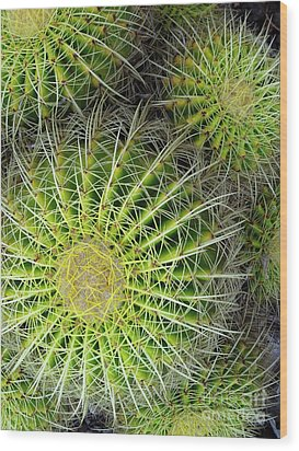 Pincushion Cactus  Wood Print by Ranjini Kandasamy