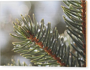 Pine Bough Dewdrops Wood Print
