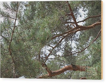 Pine Branches Wood Print by Evgeny Pisarev