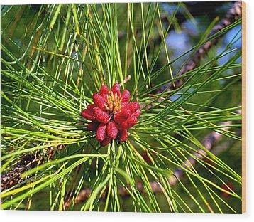 Pine Bud Wood Print