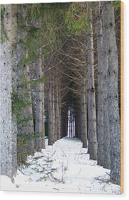 Pine Cathedral Wood Print