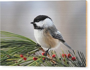 Pine Chickadee Wood Print by Christina Rollo