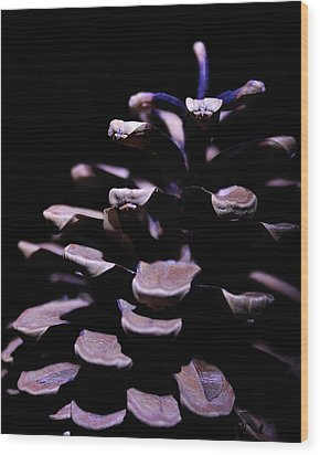Pine Cone Wood Print by Todd Soderstrom