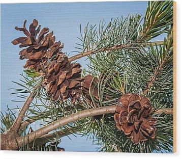 Pine Cones Wood Print by Len Romanick