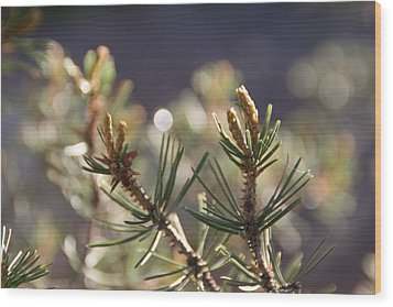 Wood Print featuring the photograph Pine by David S Reynolds