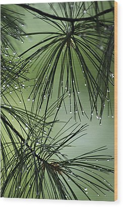 Pine Droplets Wood Print by Judy  Johnson