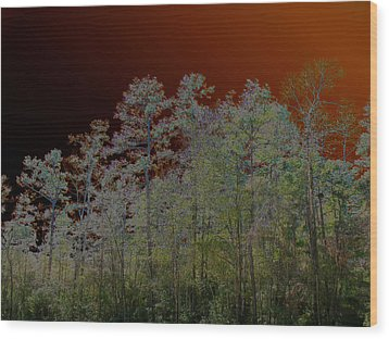 Pine Forest Wood Print by Connie Fox