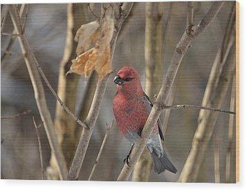 Wood Print featuring the photograph Pine Grosbeak by David Porteus