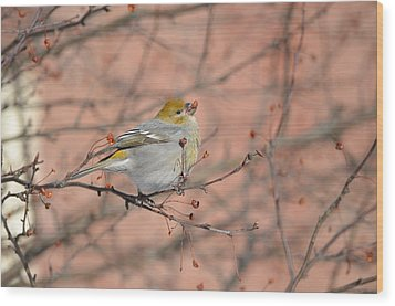 Wood Print featuring the photograph Pine Grosbeak by James Petersen