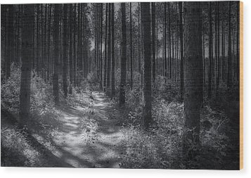 Pine Grove Wood Print by Scott Norris