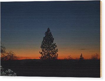 Pine In The Prism Wood Print by Tom Mansfield