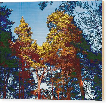 pine  Leif Sohlman Wood Print by Leif Sohlman