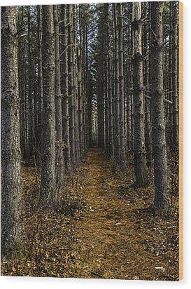 Pine Row Wood Print