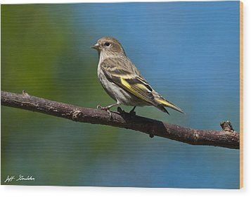 Pine Siskin Perched On A Branch Wood Print by Jeff Goulden