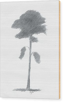 Pine Tree Drawing Number Five Wood Print by Alan Daysh