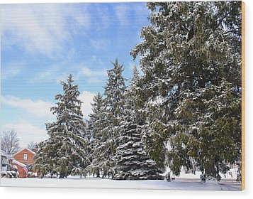 Pine Tree Haven Wood Print by Frozen in Time Fine Art Photography
