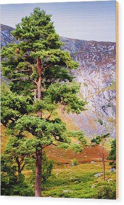 Pine Tree In Wicklow Hills. Ireland Wood Print by Jenny Rainbow