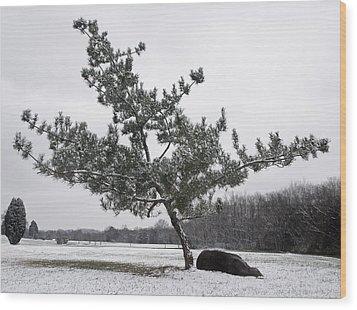 Pine Tree Wood Print by Melinda Fawver