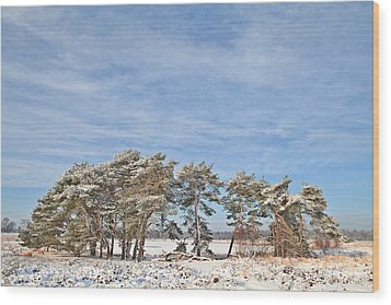 Pine Trees At Edge Of Frozen Lake Wood Print by Dirk Ercken
