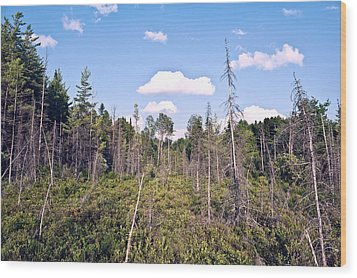 Wood Print featuring the photograph Pine Trees Forest by Marek Poplawski