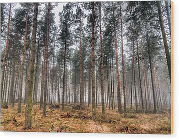 Pine Trees In Morning Fog Wood Print by EXparte SE