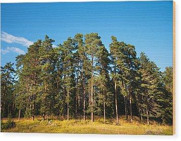 Pine Trees Of Valaam Island Wood Print by Jenny Rainbow